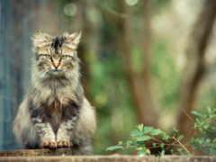 кот, сидит, красивый