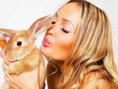 анимации, кролик, девушка