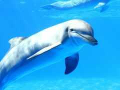 дельфин, booty