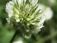 цветок, макро Фон № 23936 разрешение 1920x1200