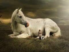 лошадь, white, укладка