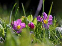 природа, трава, цветы