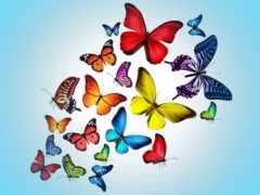 бабочки, рисунок, оптом