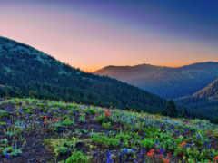 поляна, cvety, лесу
