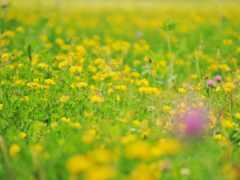 flora, foto, verde