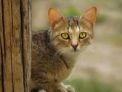кот, pinterest, images