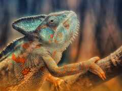 animal, diamond, chameleon