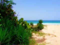 пейзаж, florida