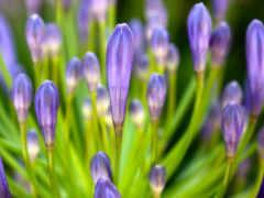 весна, цветы, flowers