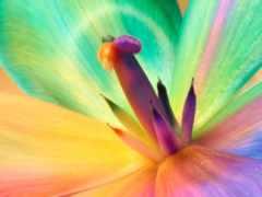 cvety, разноцветные, цветов