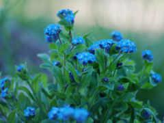 природа, макросъемке, cvety