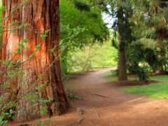 лес, trees, природа