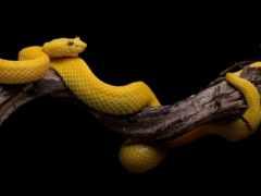 snake, зелёный, фон