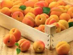 абрикос, персик, box