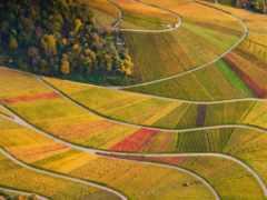 баден, vineyards, германия