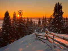 bosque, winter, pantalla