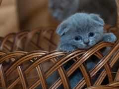 котенок, корзина, кот
