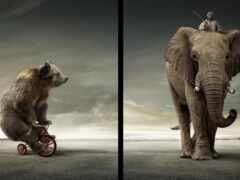 центр, медведь, слон