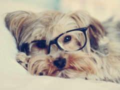 собака, очках, очки