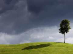 дерево, зелёный, одинокий