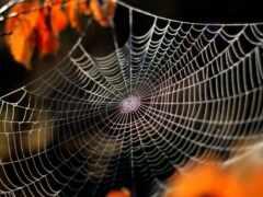 web, паук, dream