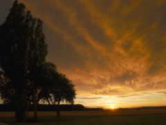 вечер, garland, trees