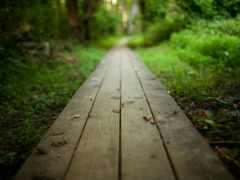 дорога, путь, природа