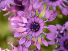 цветы, flowers, free