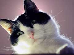 кот, cats, high