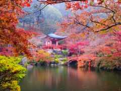 japanese, осень, мост