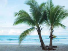 пляж, дерево, summer