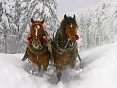 sanya, new, лошадь