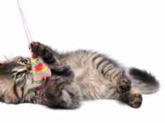 играет, котенок, кот