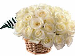 роза, white
