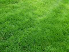 зелёный, газон, funart