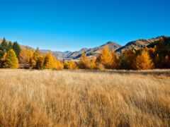 поле, осень, лес