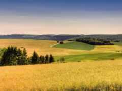поле, лес, weed