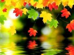 красивый, осень, лист