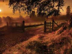 картинка, gate