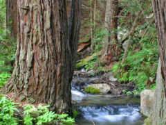 ручей, лес, trees