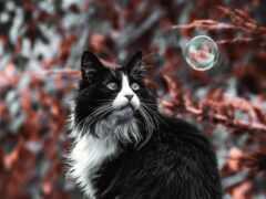 кот, pet, крыша