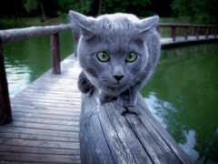 кошка, голубой, русская