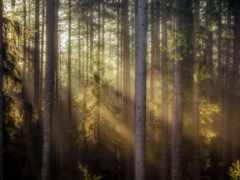 дерево, природа, сквозь