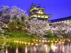 japanese, park, сакур