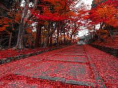 kyoto, japanese, осень