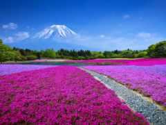 японии, весна, ли