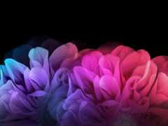 cvety, fone, красочные