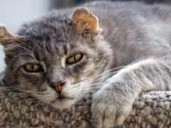кошки, лет, кошек