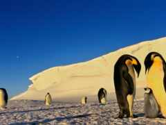 пингвин, окно, антарктида