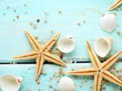 marine, seashell, унитаз